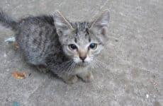 ASMR From Kittens Eating?